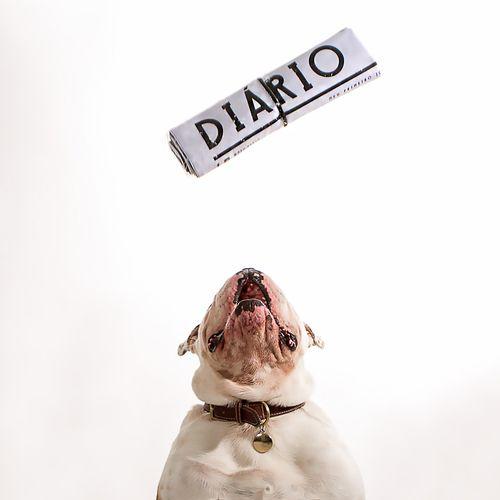 Diário Canino Tapete Higiênico Bartô